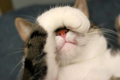 cat-covering-eyes.jpg