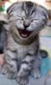 Kitty laugh.jpg