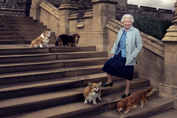 PAY-Queen-Elizabeth-II-is-seen-walking-in-the-private-grounds-of-Windsor-Castle-with-four-of-her-dogs.jpg