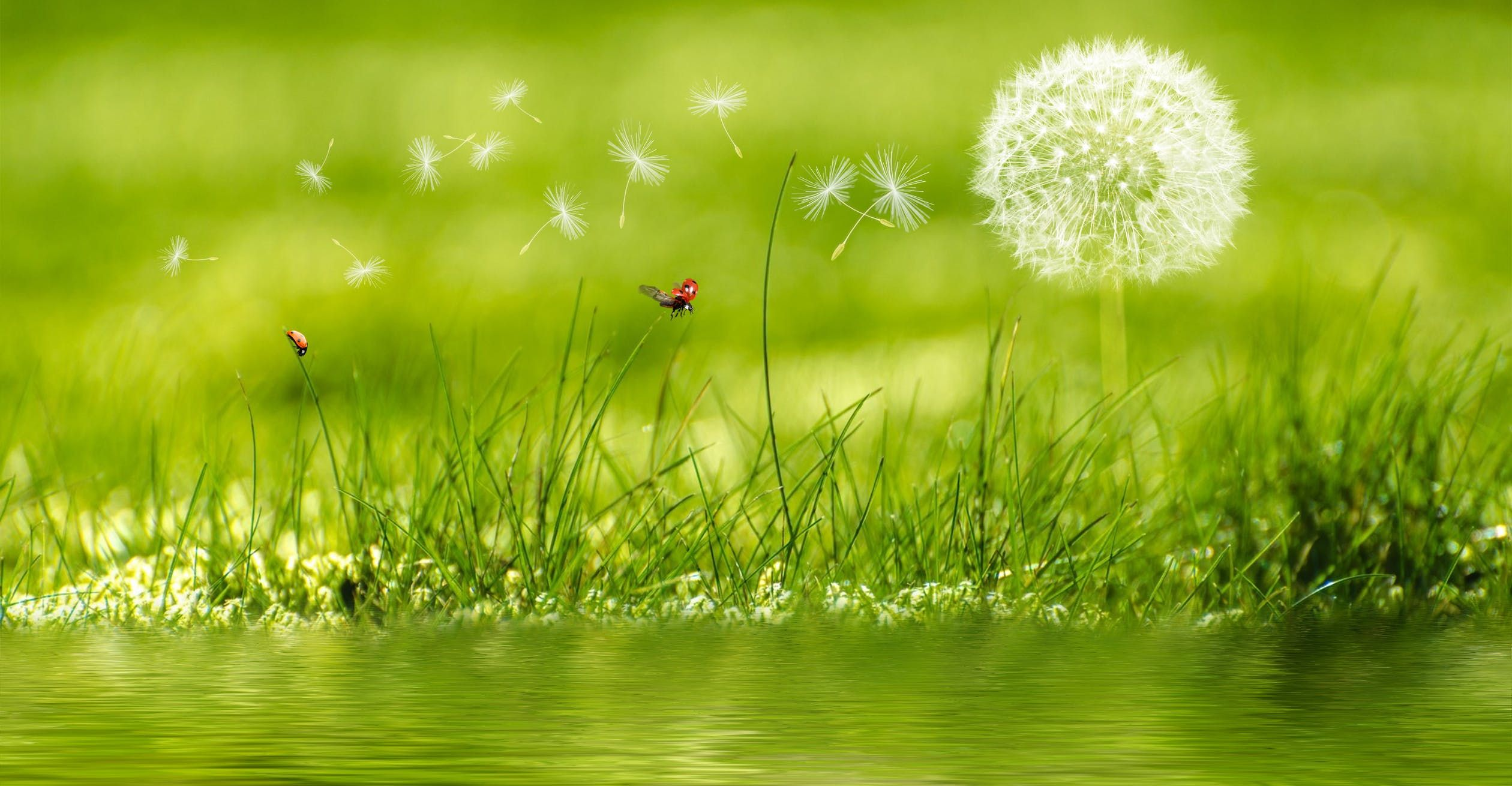 grass with wish flower.jpeg