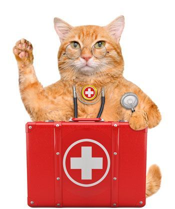 first_aid_kit_for_cats.jpg
