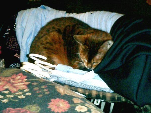 millie asleep on clothes.jpg