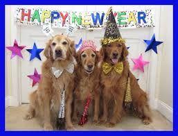 goldens new year.jpg