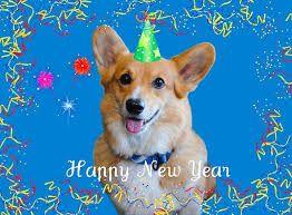 corgi new year.jpg