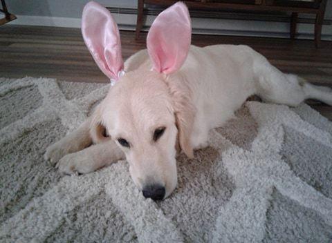 Meadow Bunny Ears.jpg