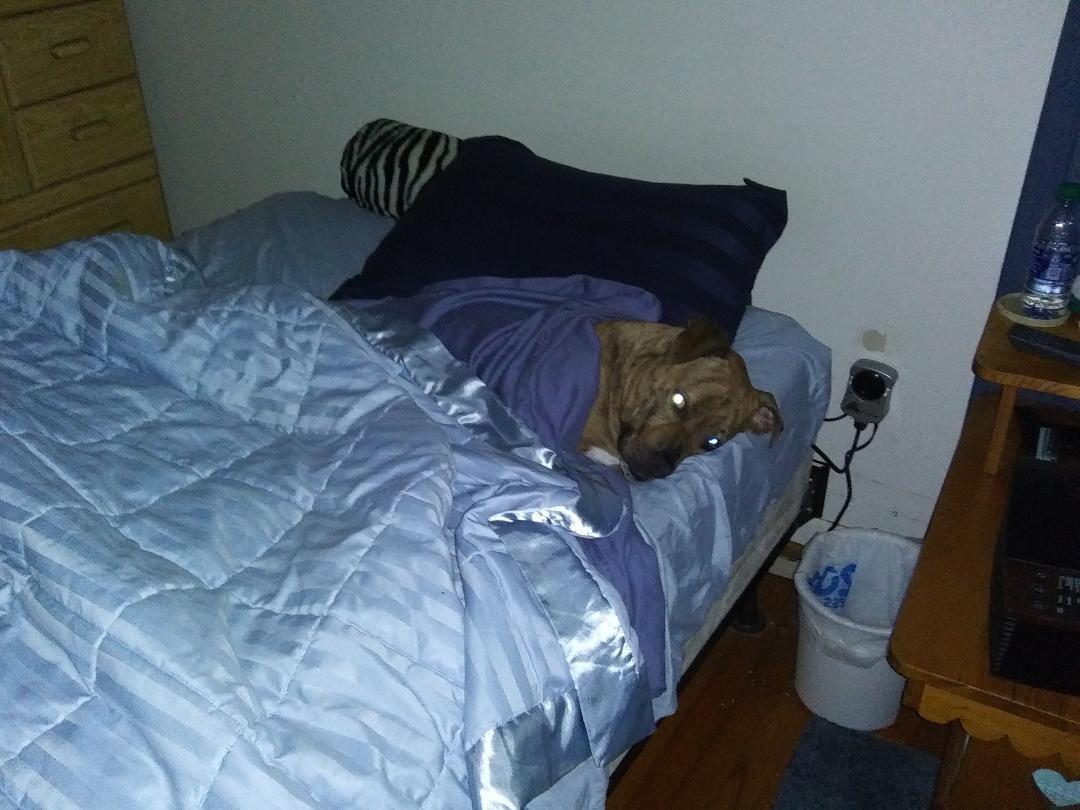 Kingston Bed.jpg