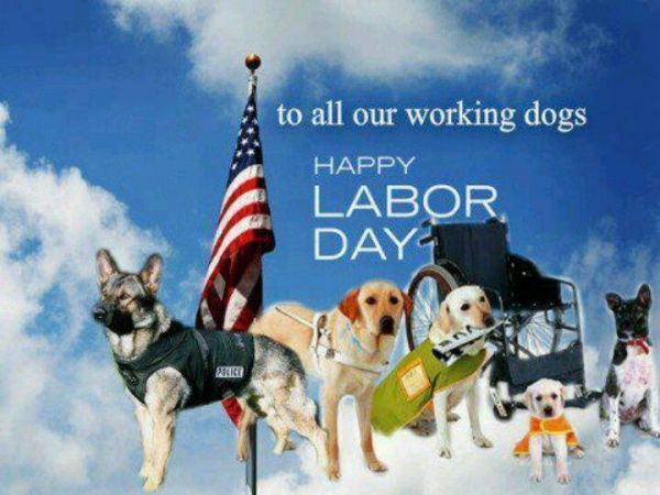 labor-day working dogs.jpg
