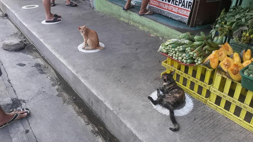 CatsSocialDistance_1.jpeg