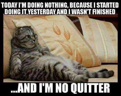 Q doing nothing kitty.jpg