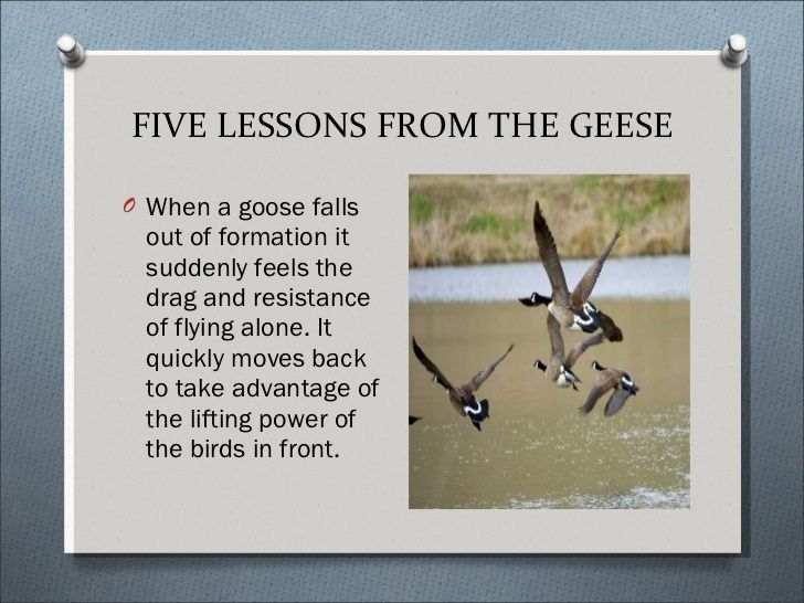 geese wisdom.jpg
