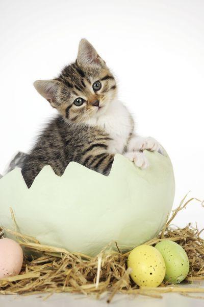 jd-21739-cat-kitten-sitting-egg-5251598.jpg
