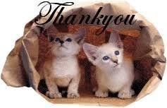 cat thank you.jpg