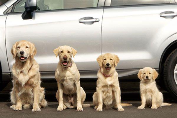Subaru-invites-you-to-meet-the-Barkley-family.jpg
