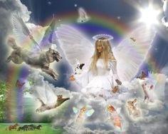 Animal angel.jpg