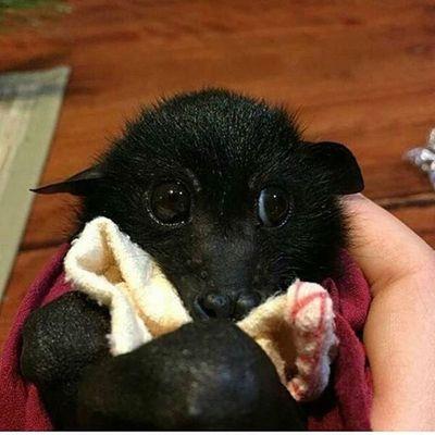 cute-adorable-bats-1-91-5ebbc28715873__700.jpg