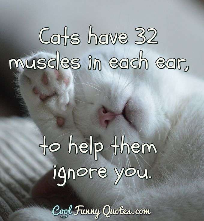 cats-have-muscles-in-each-ear-to.jpg