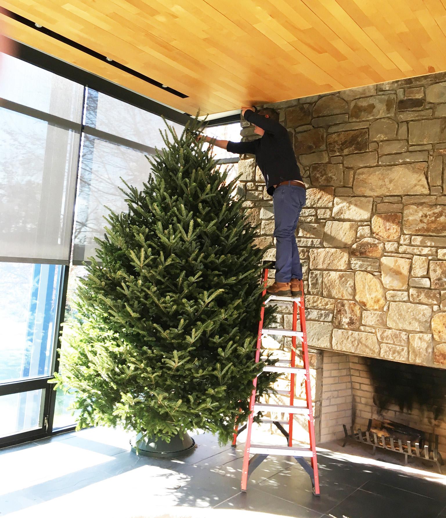 DD on ladder with tree 2016.jpg
