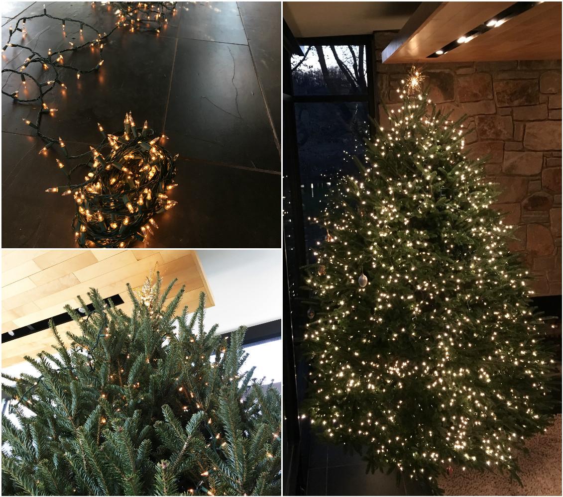 Tree Lights Matrix.jpg