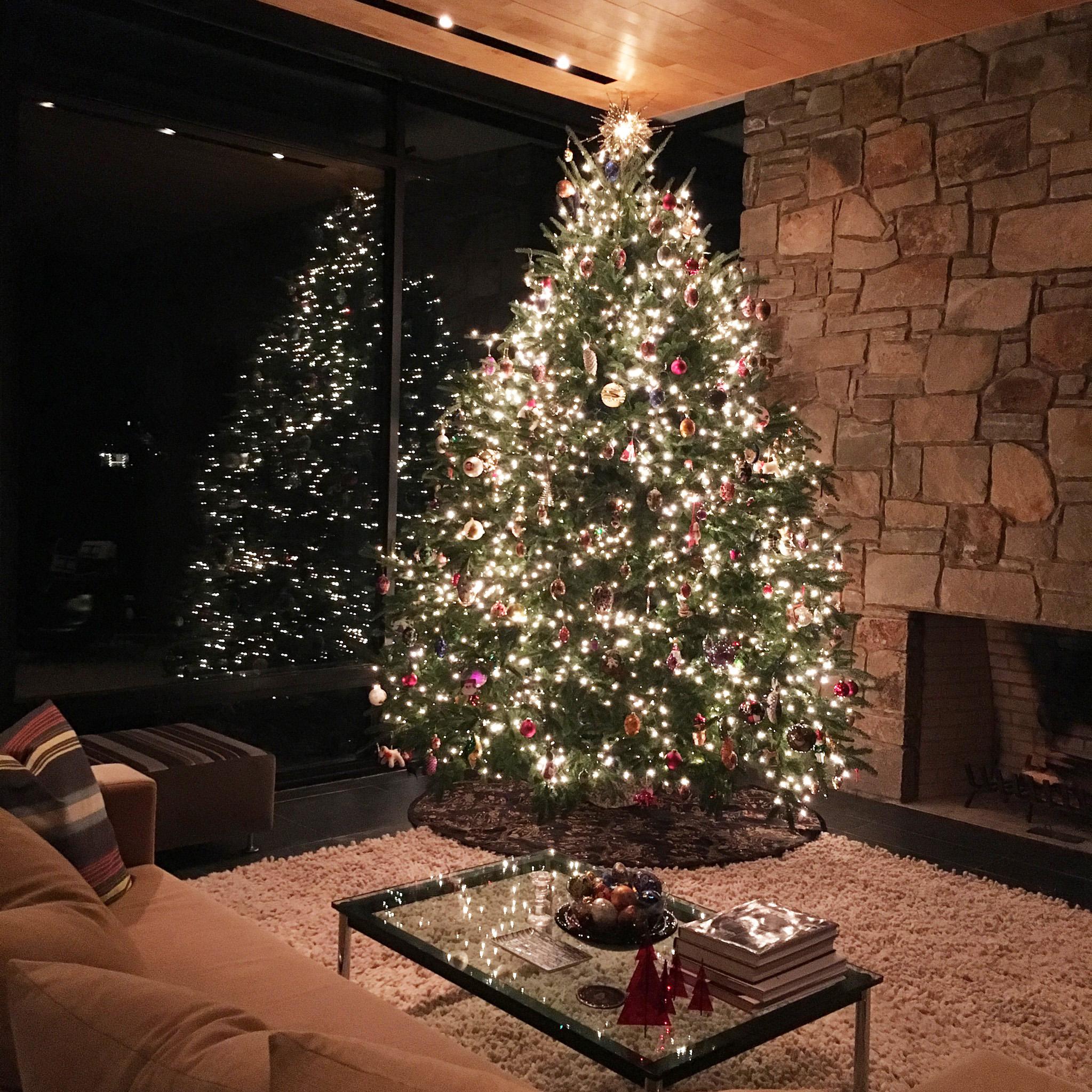 DD Christmas Tree 2016.jpg