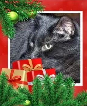 ChristmasgreetingMidnight (3).JPG