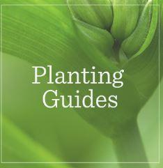 Planting Guides.JPG