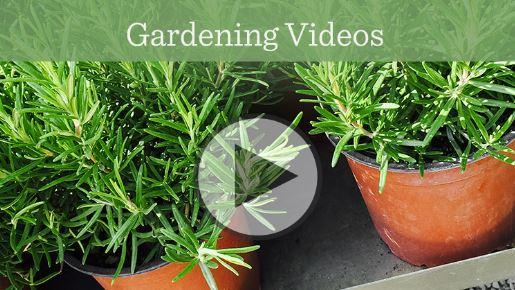 Garden Videos.JPG