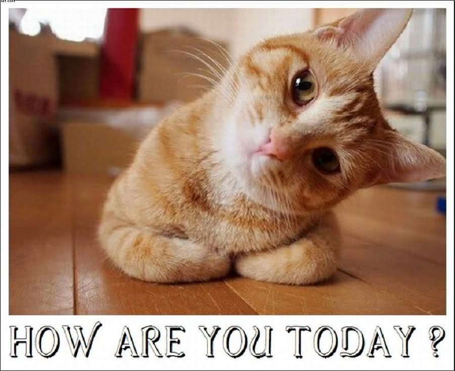 Beautiful-Cat-How-Are-You-Good-Morning-Image.jpg