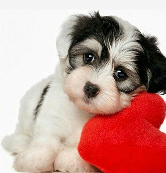 dog-valentines.jpg