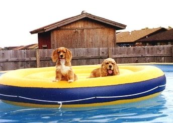 bo-and-bit-on-raft.jpg