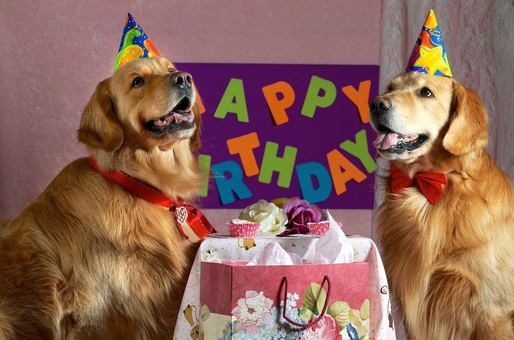 Картинки дня рождения животными
