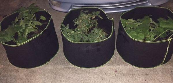 Grow Bags.jpg
