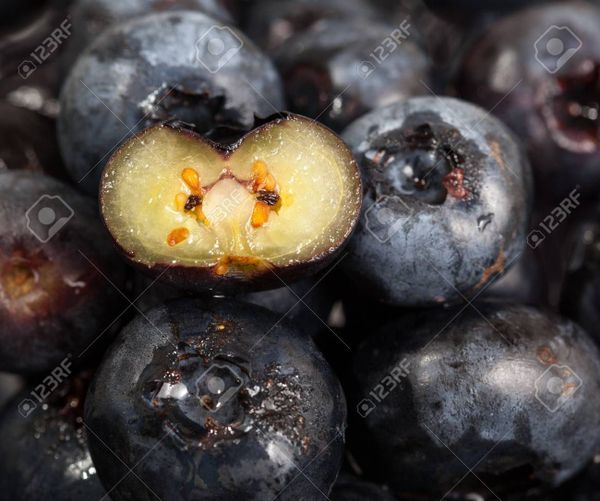 blueberries-with-one-sliced-through-the-center-to-show-seeds.jpg