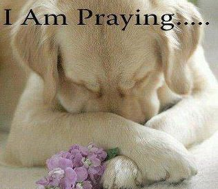 Praying Dog.jpg