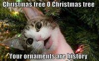 funny-christmas-cats-photos-13.jpg