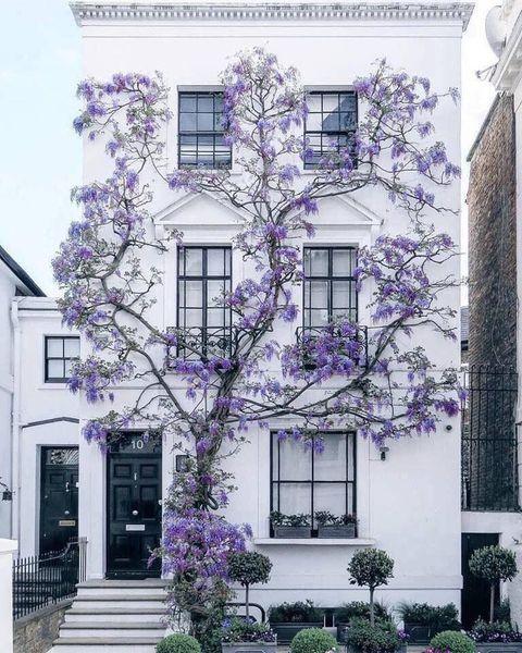 lilac house.jpg