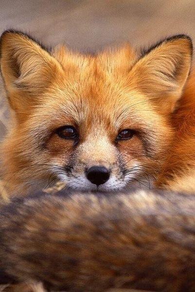 Foxxee .jpg