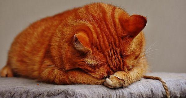 do-cats-cry.jpg