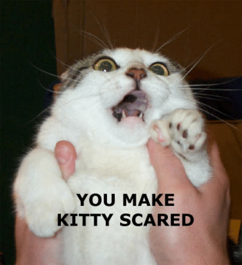 you-make-kitty-scared-57285138.png