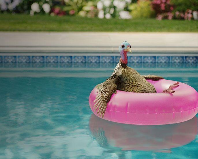 duck-mobile-min.jpg