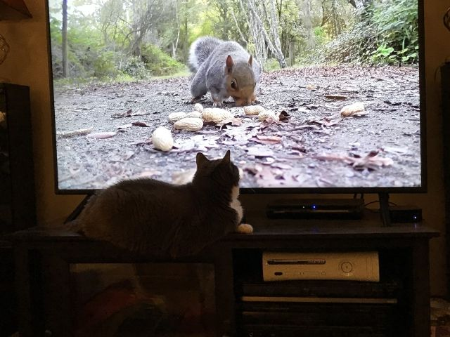 Frankie squirrel TV sized.jpg