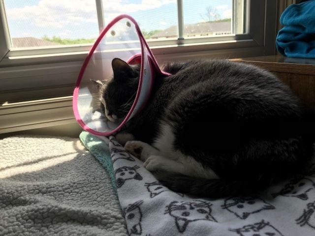 Frankie sunshine snoozer SZD.jpg