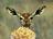deerpopcorn.png