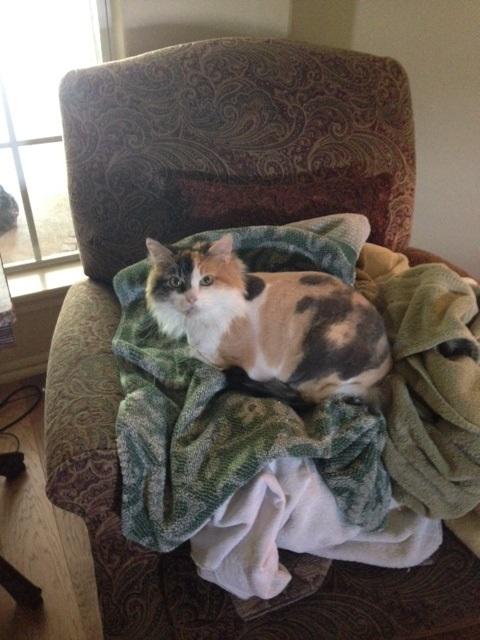 Callie on towels.jpg
