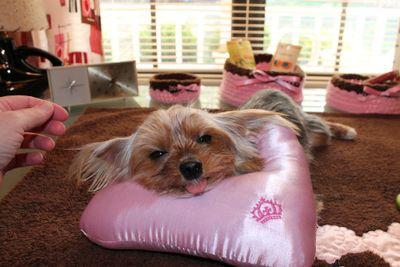 working grooming pillow.JPG