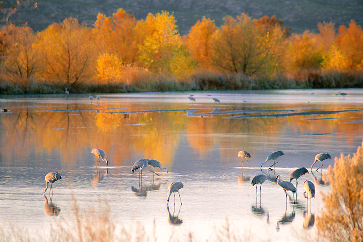 New Mexico color