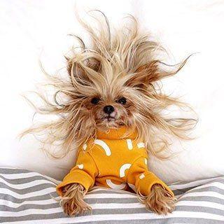 dog-hair-goals.jpg