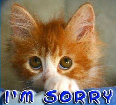 kitty sorry.jpg