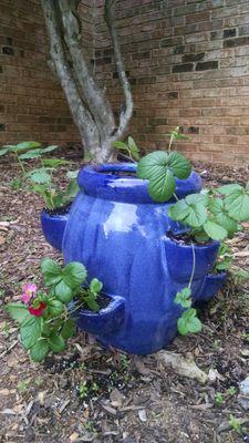 Strawberry Pot.jpg